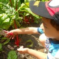 teaching-garden-kids