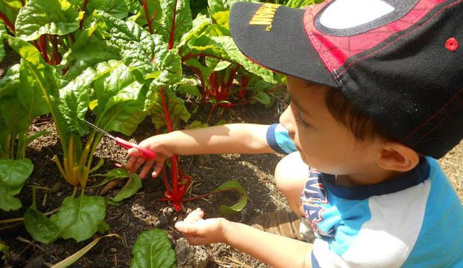 teaching-garden-kids