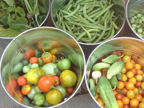 The Mother-load from the Demonstration Garden