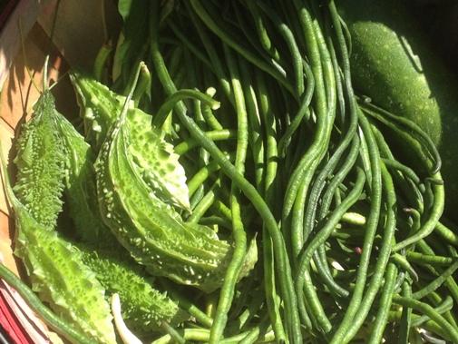 Final Harvest October 3, 2012 Kitchen Garden