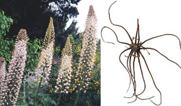 eraHIMAL and root