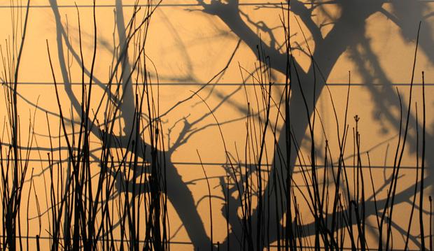 pauls pick morning shadows