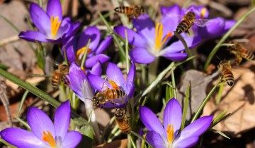 2013 march 26 bees at TBG 320