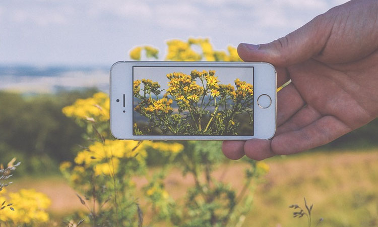 iPhone Flower Photography! Shoot & Edit for Maximum Impact