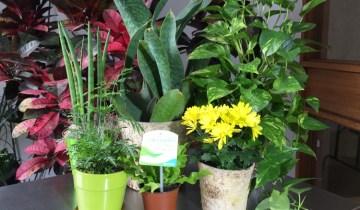 clean air plants