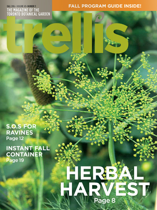 Trellis Fall 2016