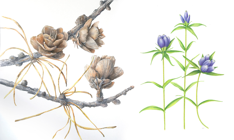 Art Exhibit | Native and Indigenous Plants of Canada