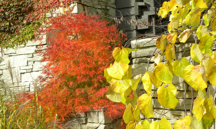 Caring for Your Garden in the Fall