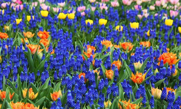 Plant Beautiful Bulbs