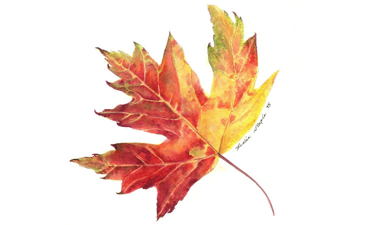 Botanical Art - Fall