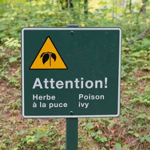 Poison Ivy Warning sign in a forest