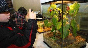 Boy taking a photo of beetles.