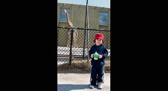 A young child does not look thrilled to be standing beside a giraffee at the Toronto Zoo