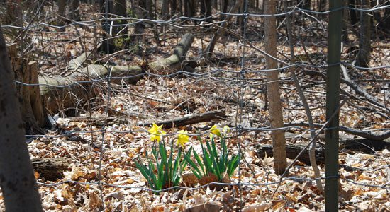 Spring has bloomed at the Toronto Zoo.
