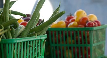Several vendors at the UTSC farmers' market sold fresh produce, all grown at local GTA farms.