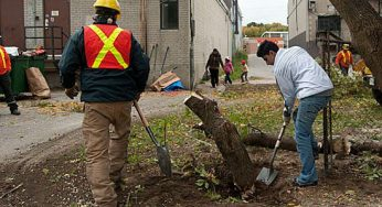 Local volunteer Masih Mahebzada works to clear a new path that connects Cougar Court to Eglington Ave. E.. The heavily used walkway used to be pitch black at night, but now that several trees have been cut down and a section of fencing removed, it will now be a brighter and safer place to walk.