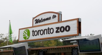 James Wattie/Toronto Observer