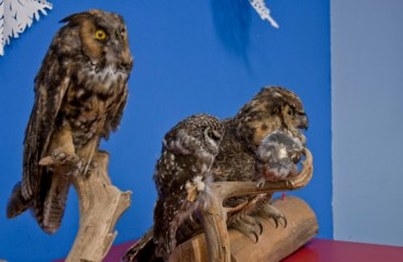 Taxidermied owls were brought to the presentation by Erin Bullis to show the guests the different kinds of owls found in the city.
