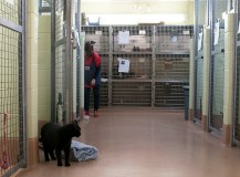 Scarborough cat lovers volunteer at the shelter in their leisure. TAS website currently stopped accepting any more applications since all positions are full.