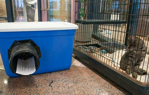 Joint effort by TAS, Toronto Humane Society and Toronto Feral Cat TNR Coalition built numbers of winter shelters. The shelters were distributed by the groups throughout Scarborough.