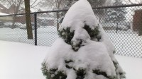 Snow blankets Brampton Feb. 8, 2013 (Robin Dhanju/Toronto Observer)