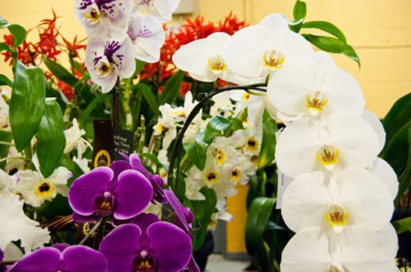 Some orchids featured at the event were beautiful hybrids of different species.
