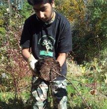 Mohammad Ayaz-Zafar, 19, loosens up the roots of a tree before he plants it during the Oct. 20 Great Canadian Shoreline Cleanup event at Highland Creek.