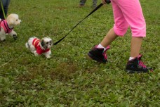 Meet Scarborough's cutest small dog!