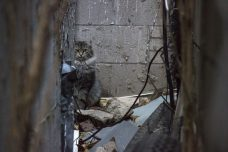 A tabby cat peering out from the back of the small alleyway.