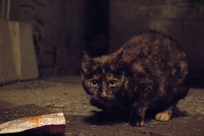 Even feral cats love Nielsen's treats.