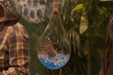 Terrariums are one of the more creative ways to display your prize plants.