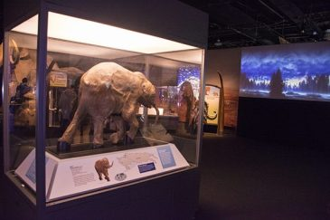 The exhibit is centred around the discovery of Lyuba, a one month old mammoth specimen. She is the best preserved specimen in the world.