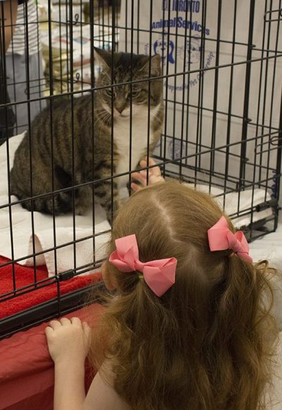 A young girl tries to pet a cat through its cage.
