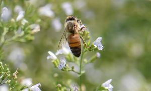 Bee_Edwards_Gardens-2.jpg