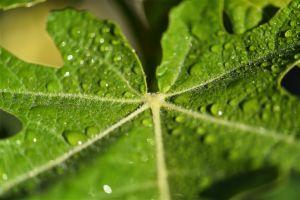 Leaf-3.jpg
