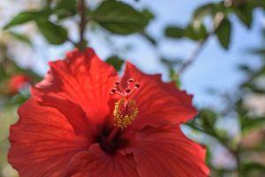 Allan_Gardens-3.jpg