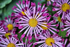 Allan_Gardens-5.jpg