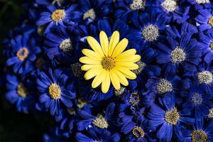 Allan_Gardens-c80.jpg