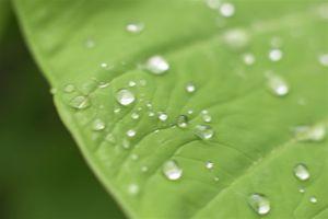 Flower_macro_leafdrop.jpg