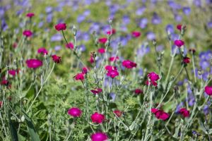 Flowers_Gardens-3.jpg