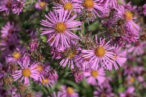 Flowers_Macro-30.jpg