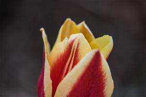 Gardens-14.jpg