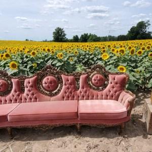 davis-sunflowers-35