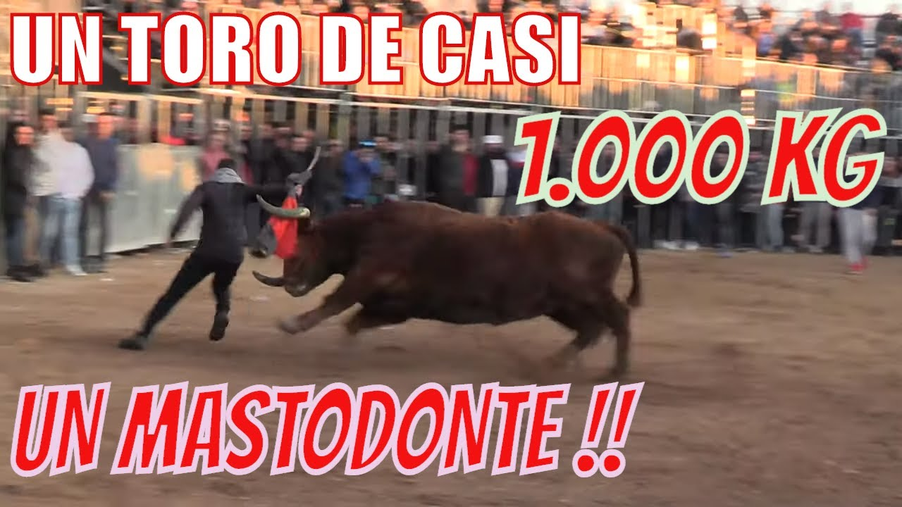 Un toro de casi 1.000kg