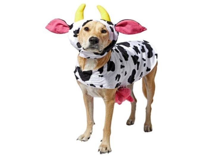 perro disfraz vaca