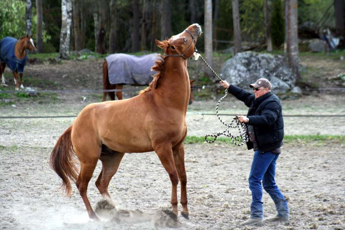 Att dansa med hästar.....Westernclinic med Per Larsson.... (6/6)