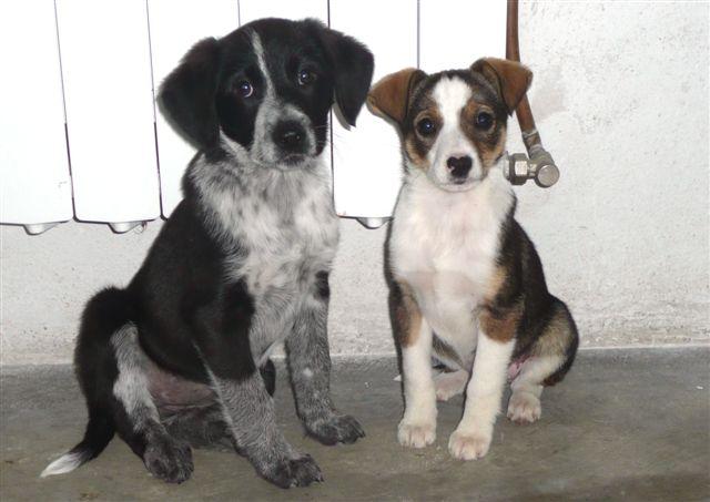 Malú y Lina