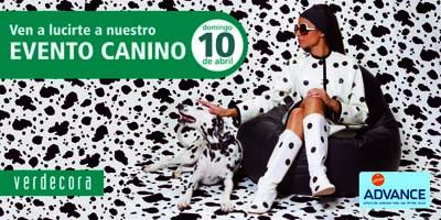 Concurso Canino en Torrelodones