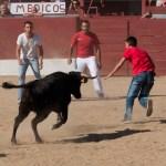Encierros Fiestas de Hoyo de Manzanares 7