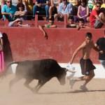 Encierros Fiestas de Hoyo de Manzanares 13